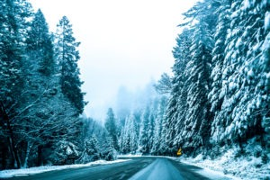 snow dusted ever green tree landscape ideas