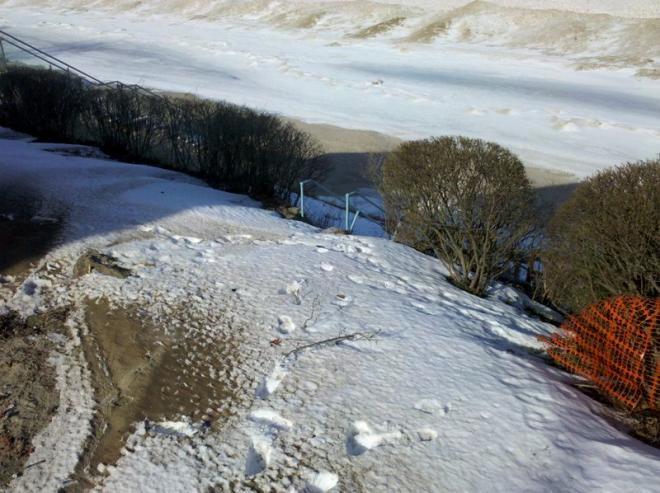 how to protect landscaping in winter