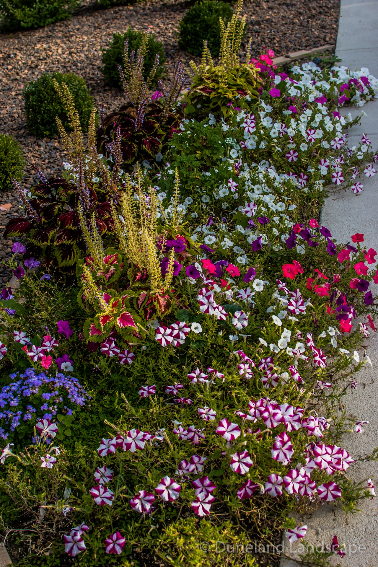 types of landscaping flowers