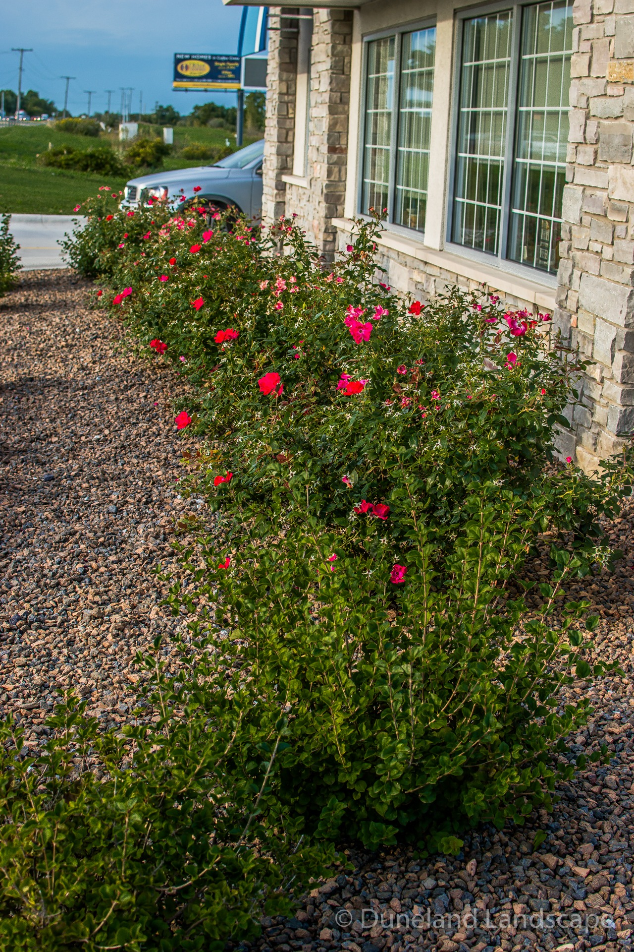 pebble flower bed surrounding bushes