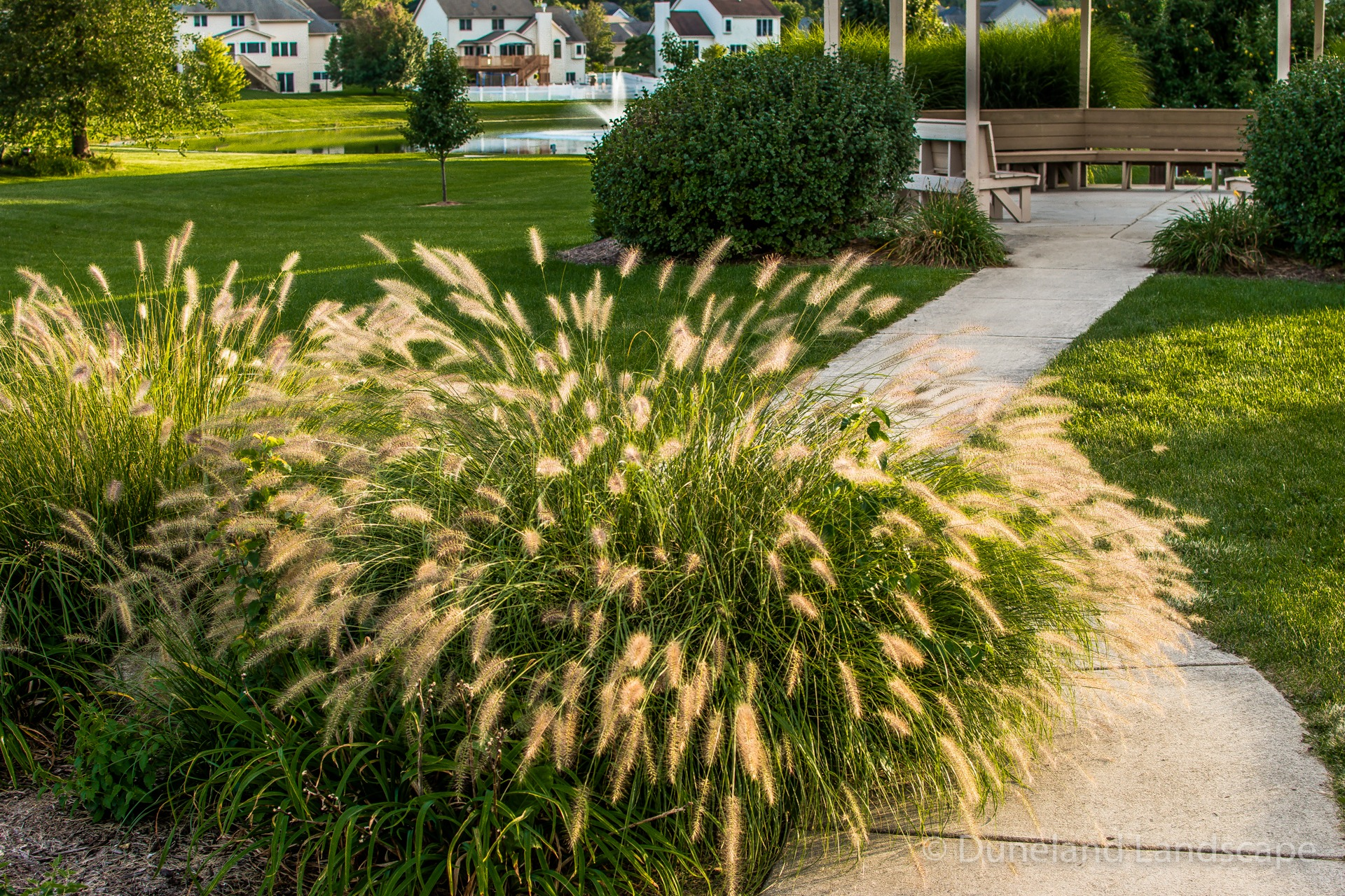 different types of bushes for landscaping