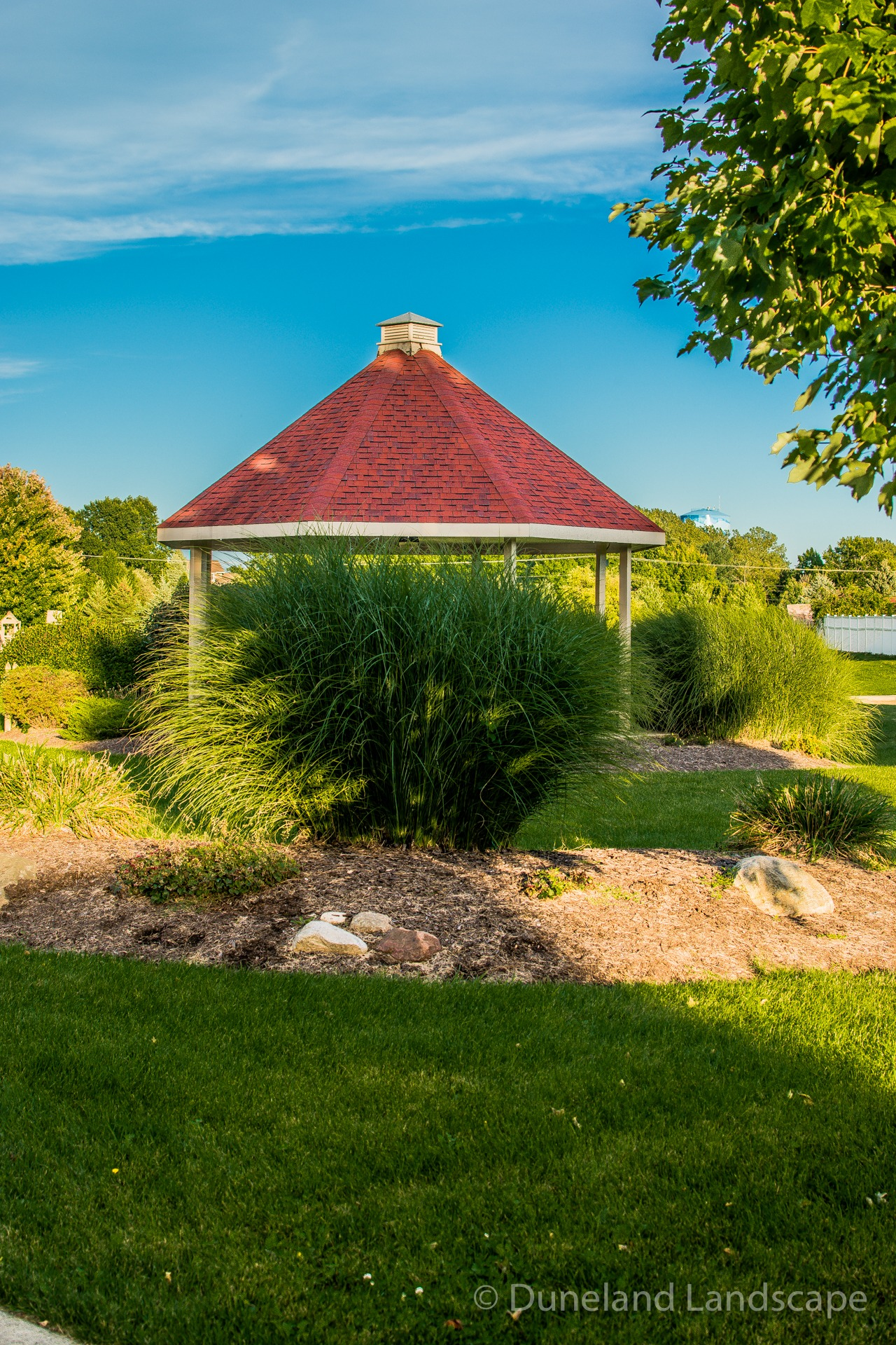 Tall green bushes for landscaping