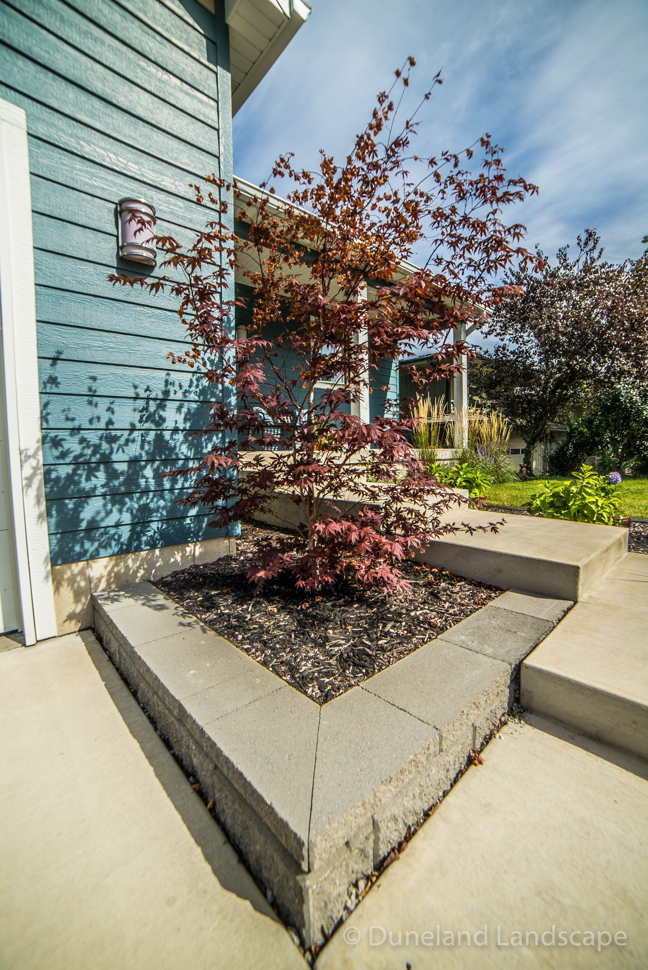 red leaf tree and hardscaping