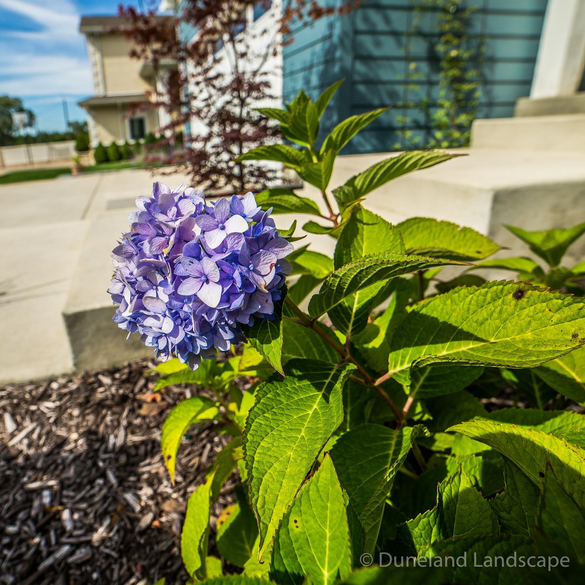 Flower plants for landscape